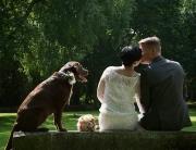Hochzeitsfotograf_Kremmen_Ziethen_Hund_Heiraten